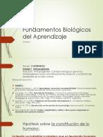 fundamentos biologicos del aprendizaje