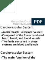 Mammalian Circulatory System