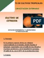 Cultivo de citricos.pdf