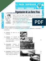28 Ficha Niveles de Organizacion de Los Seres Vivos Para Cuarto de Primaria