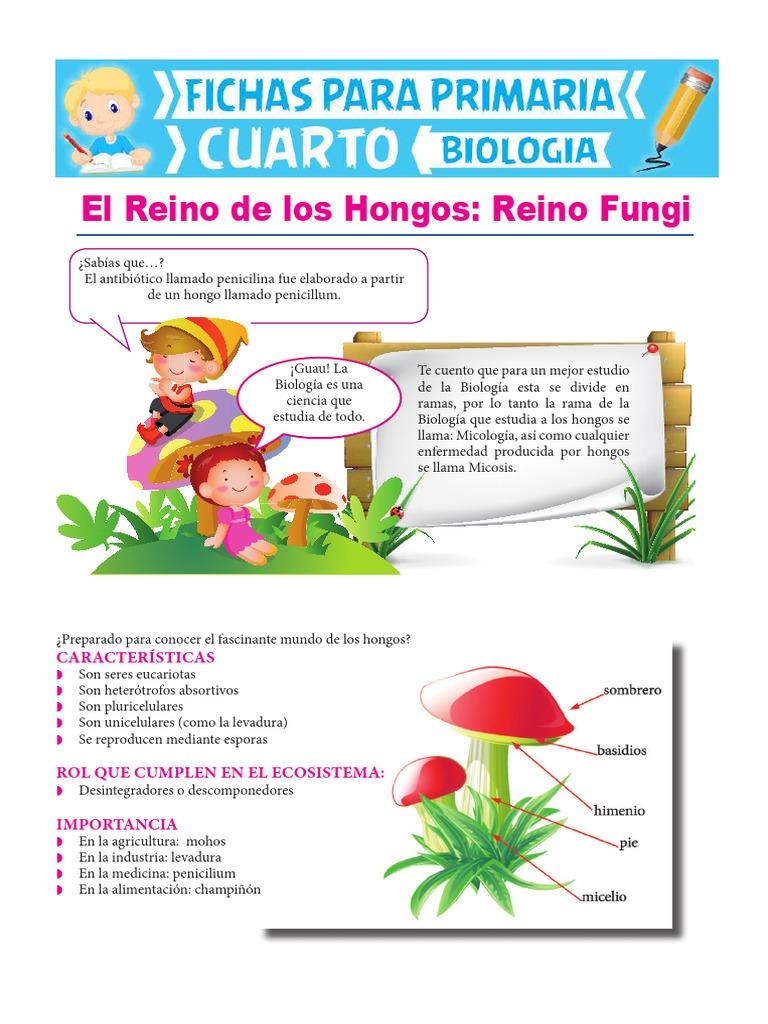 Reino Fungi Para Cuarto De Primaria Hongo Biología