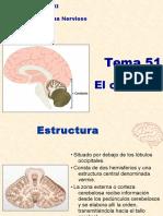 51. El Cerebelo