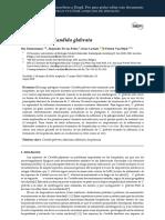 Adhesins in Candida Glabrata ES