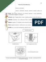 5. Theaceae