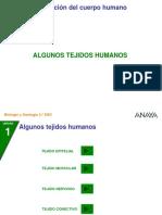 Tejidos Fundamentales (1)