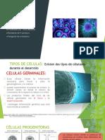 Tipo de Celulas