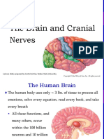Brain and Cn