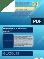 metabolismo GRUPO2 IQI