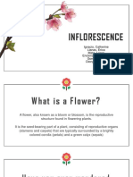 Types of Inflorescence