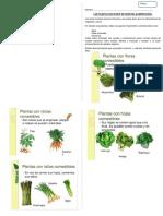 CsN plantas  que se comen.docx