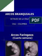 3. Arcos Branquiales.pptx