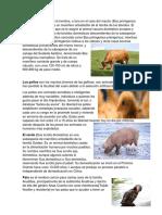 Animales Domesticos Definicion