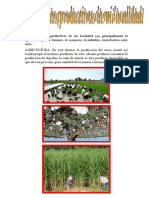 Informe de Actividades Productivas Localidad
