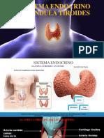 Tiroides y Glandula Suprarrenal