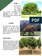 EL ALGARROBO.docx