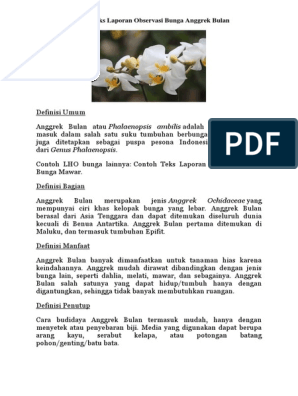 Contoh Teks Laporan Observasi Bunga Anggrek Bulan