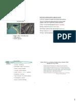 Cyanobacteria 1