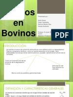 Taninos en Bovinos maos.pptx