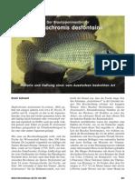 haplochromis desfontainii