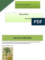 PPT PALMA AFRICANA