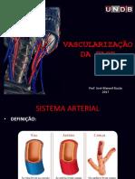 Anatomia cabeça e pescoço