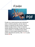 El Pulpo Ximena