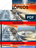 HALOFILOS