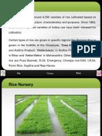 Varieties in Rice Nursery-newformat