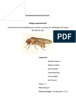 Informe Drosophila (1) (3).rtf