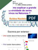2. Ácidos Nucleicos Alunos- 11º