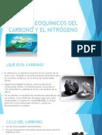 Ciclos Biogeoquímicos Del Carbono y El Nitrógeno