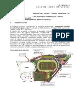 Memoria de Accesibilidad Universal Parque Estadio