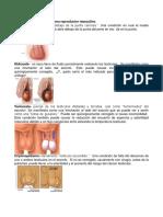 10 Enfermedades Del Sistema Reproductor Masculino