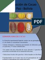Prod. Cacao