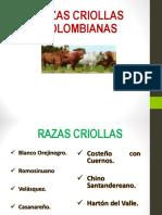 Razas Criollas 2015_1