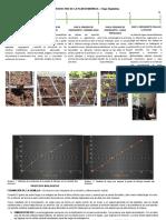 Ciclo Productivo de La Planta Moringa