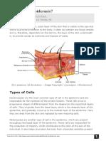 What-is-the-Epidermis.pdf