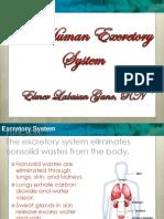 5 Excretory System 2013 1