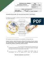 Evaluacion 6  Unidad 2 Tema 1 Y 2  Celulas y tejidos.docx