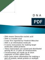 D N A structure