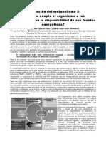 integracion metabolismo.pdf