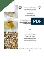 Práctica 17.Parasitismo de Huevecillos de Sitotroga Cerealella Por Trichogramma Pretiosum