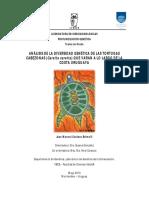 Diversidad genética de Caretta caretta