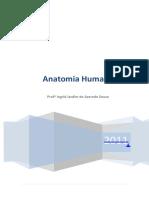 Apostila Anatomia Humana i