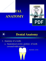 Dental Anatomy.pps