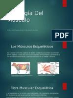 Actividad 1 (Fisiología Animal)