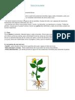 Guía de Plantas 1