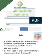 Pele e Endócrino (1)