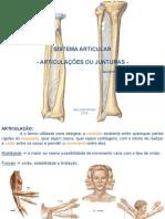 241833266-Aula-03-Sistema-Articular-1-pdf.pdf