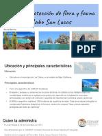 Presentacion Ambiental Cabo San Lucas